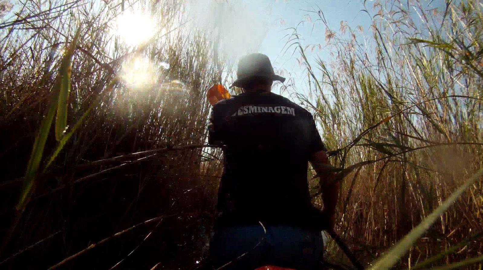 10. Reeds everywhere.JPG